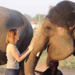 Покажите мне слона